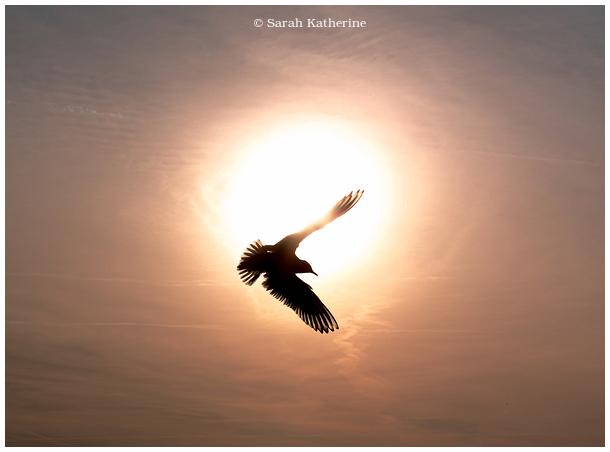 gull, sun, sky