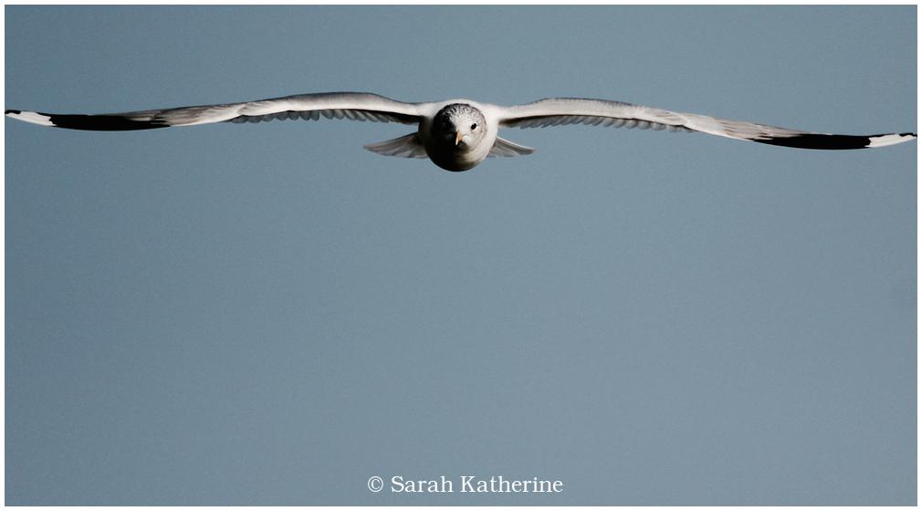 gull, sky, spirit
