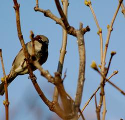 When Sparrows Stare