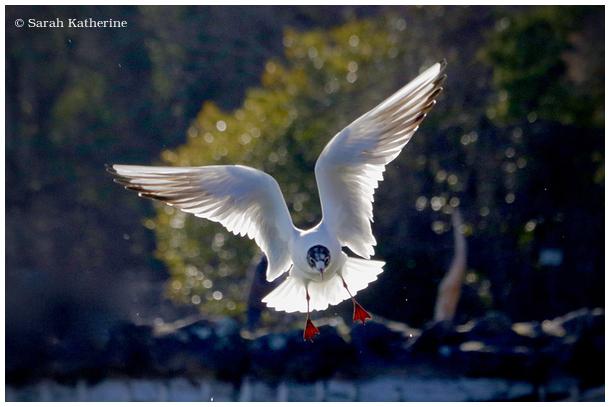 gull, angel, spring