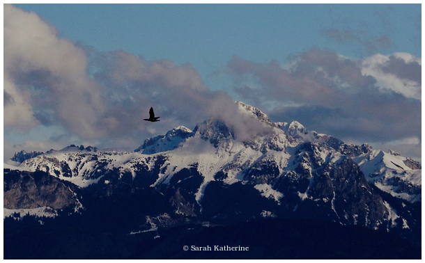 cormorant, mountain, west, clouds, snow