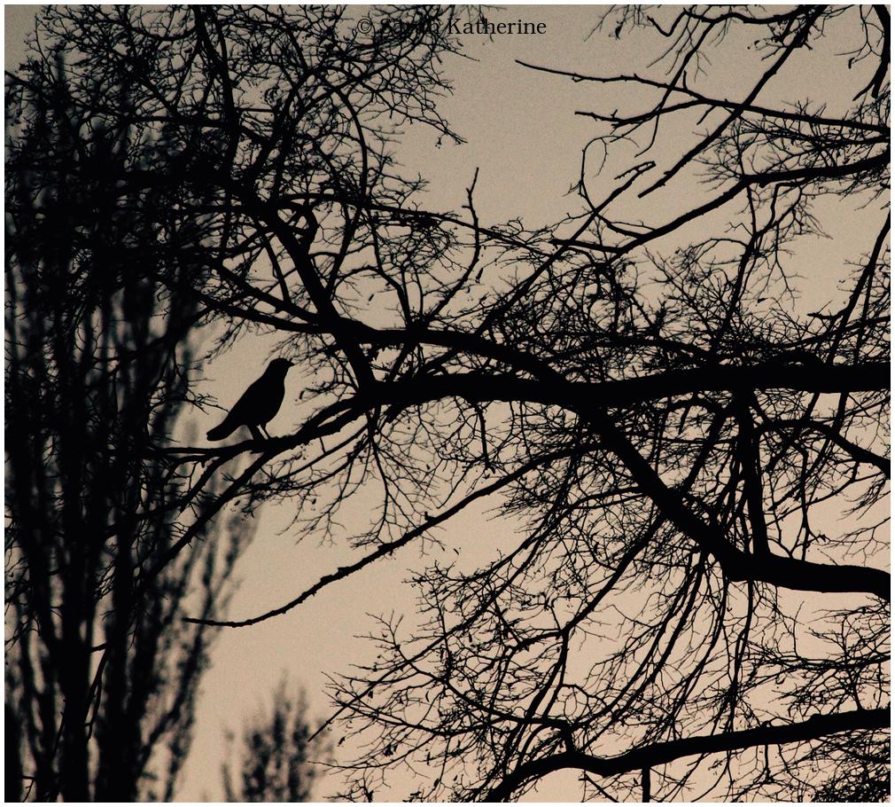 crow, dream, tree