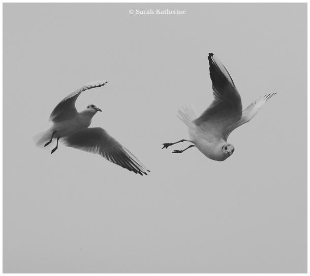 gulls, sky