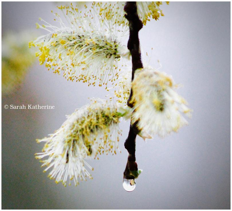 spring, rain