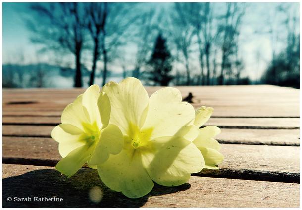 spring, flowers