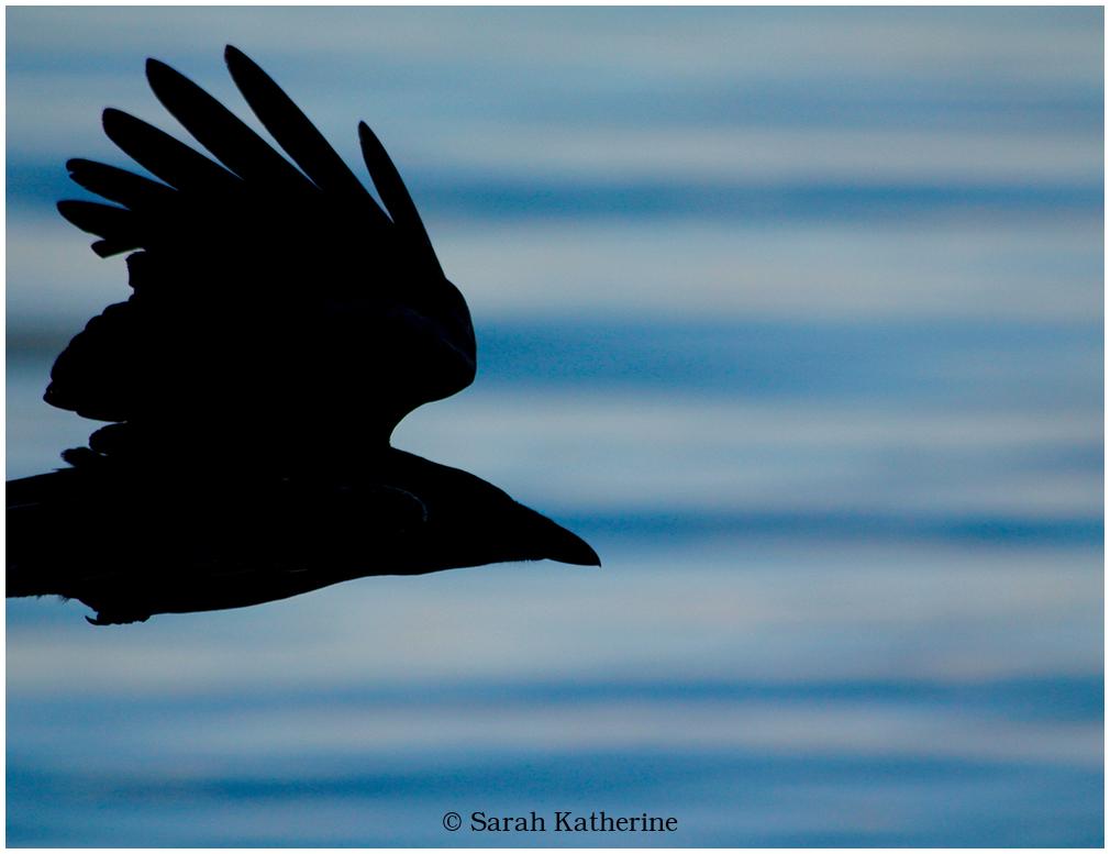 crow, lake