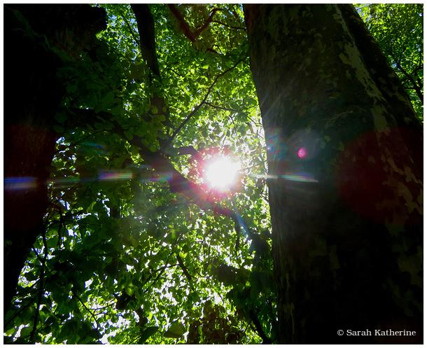 sun, trees, spring