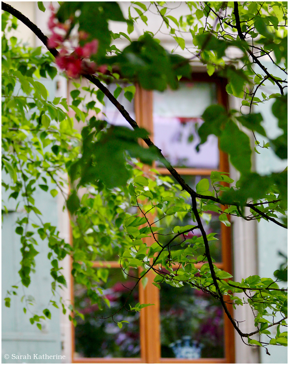 window, sprig, tree, blossom