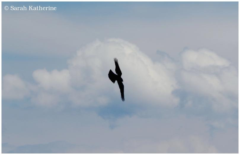 cloud, sky, back kite
