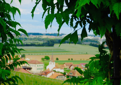The Vineyard Village