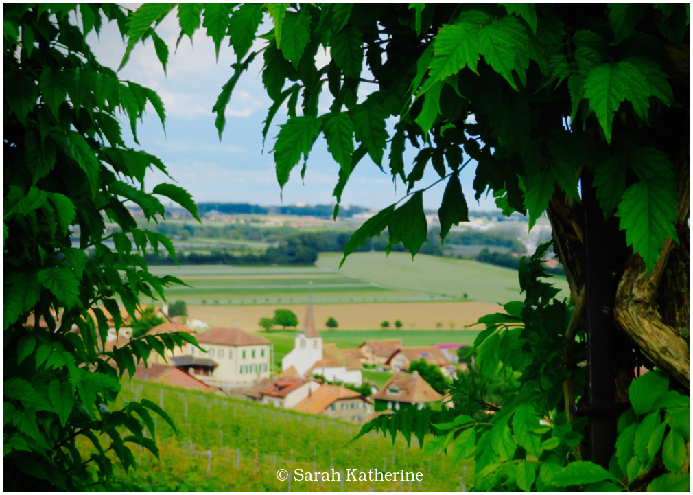 village, vineyards, wisteria