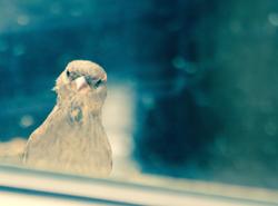 The Window Watcher