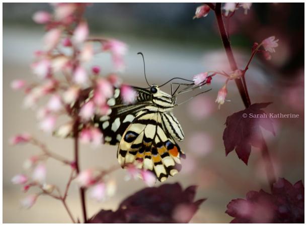 butterfly, tree