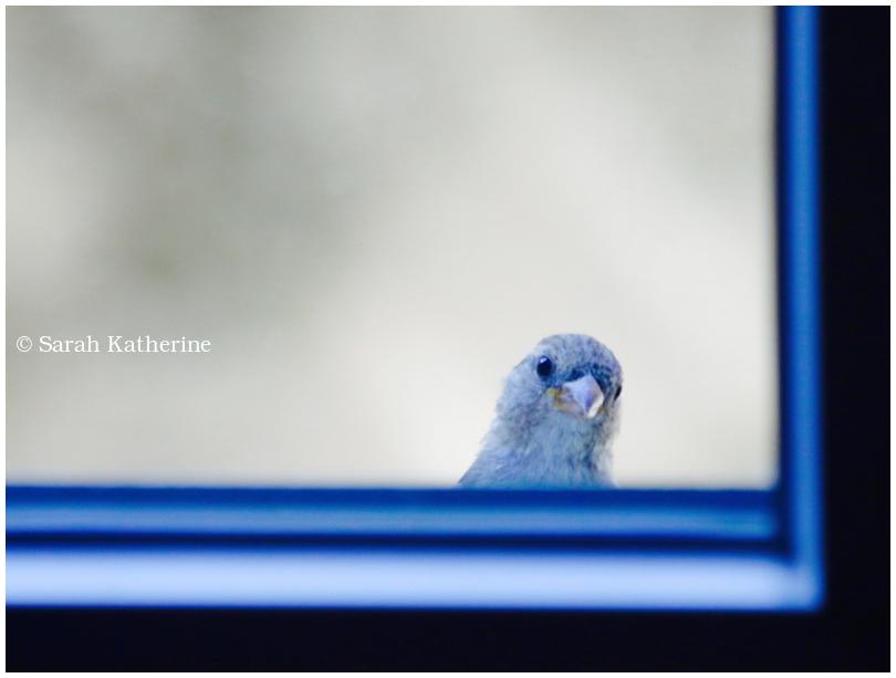 sparrow, window