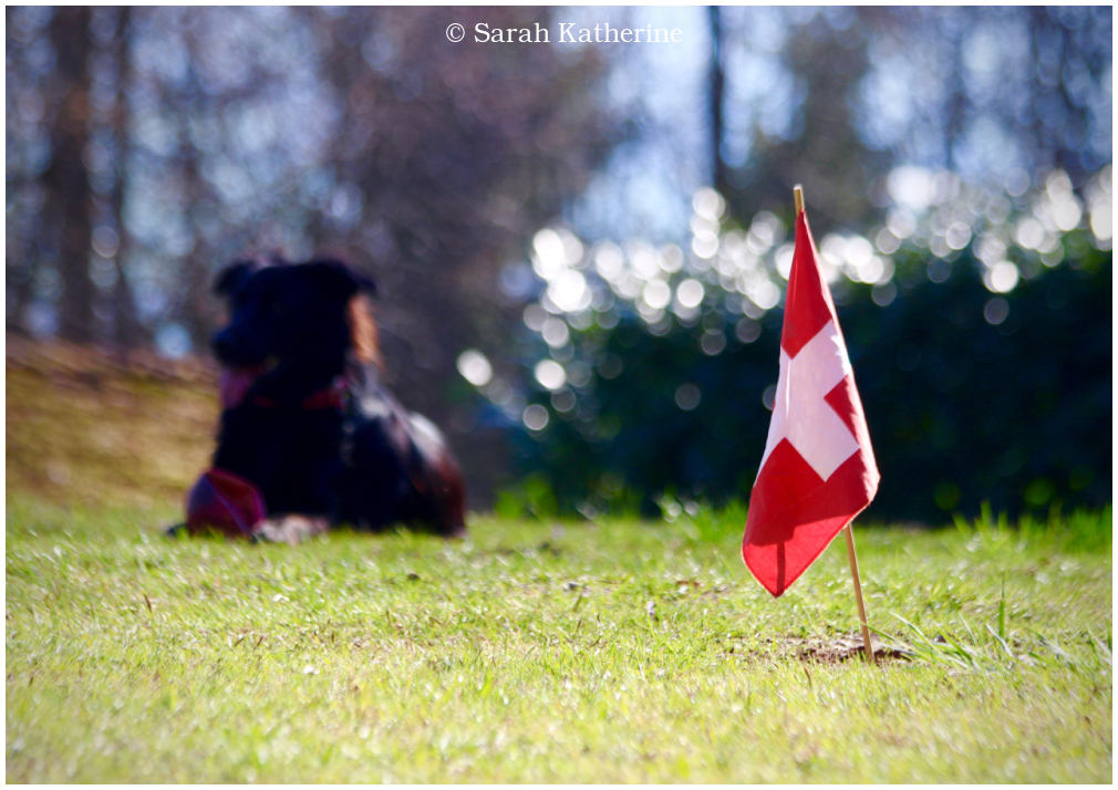 dog, flag, summer