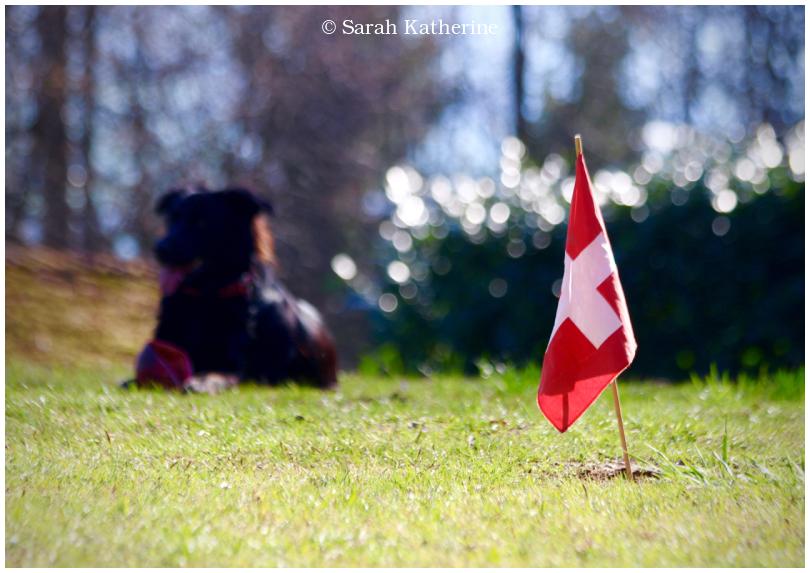 dog, flag, summer