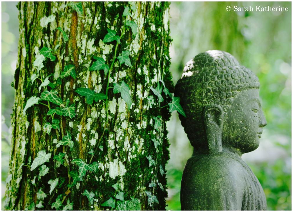 Buddha, forest, tree, ivy