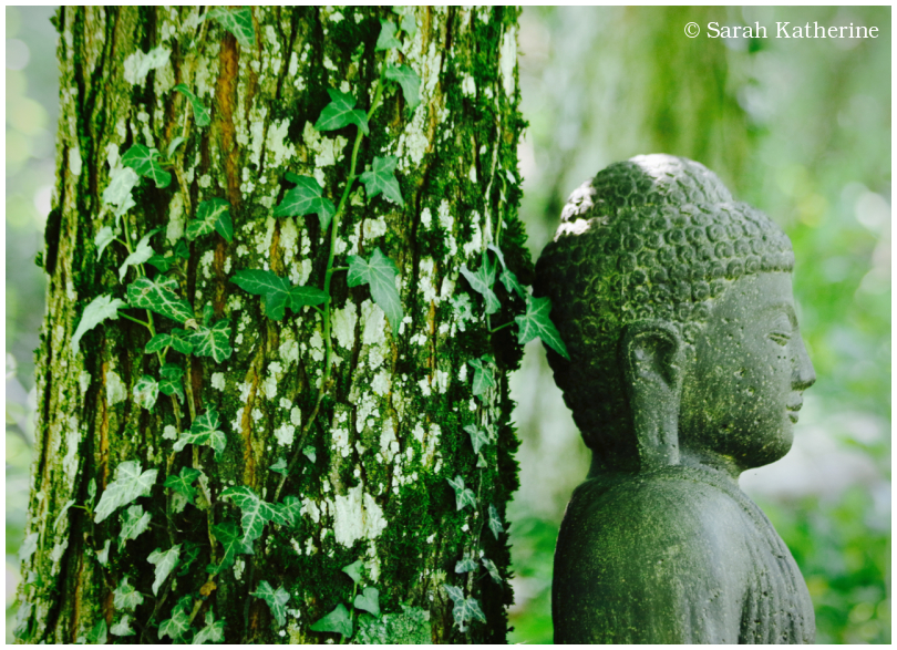 Buddha, forest, tree, ivy
