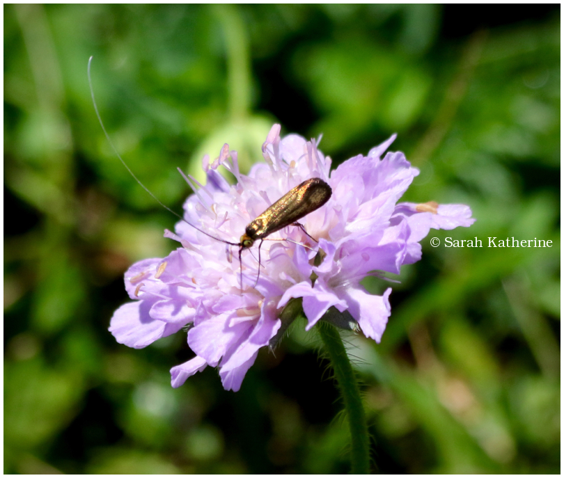 insect, bug, gold, garden