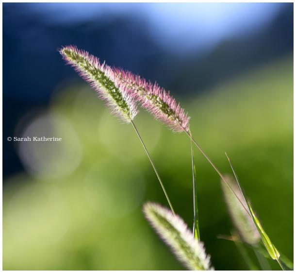wild plants, summer