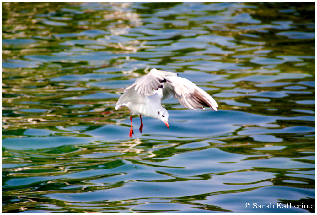 gull, water, lake, pattern