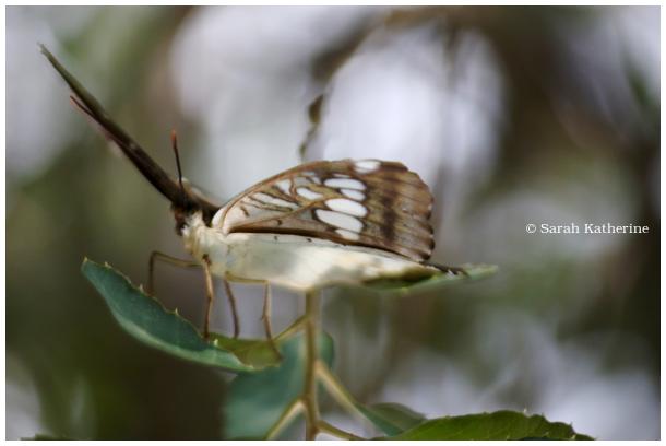 butterfly, sunlight