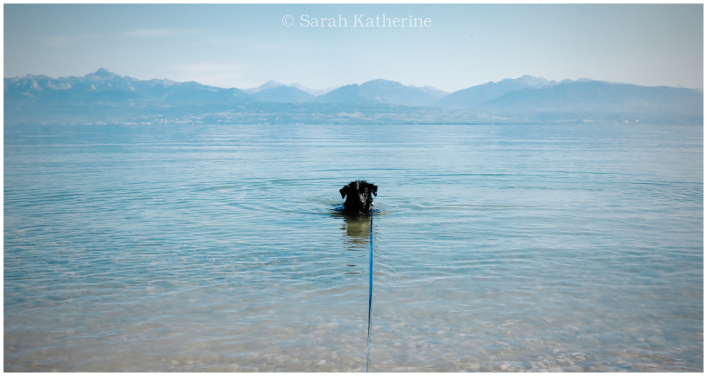 dog, lake, blue
