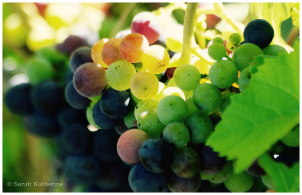 grapes, sunlight