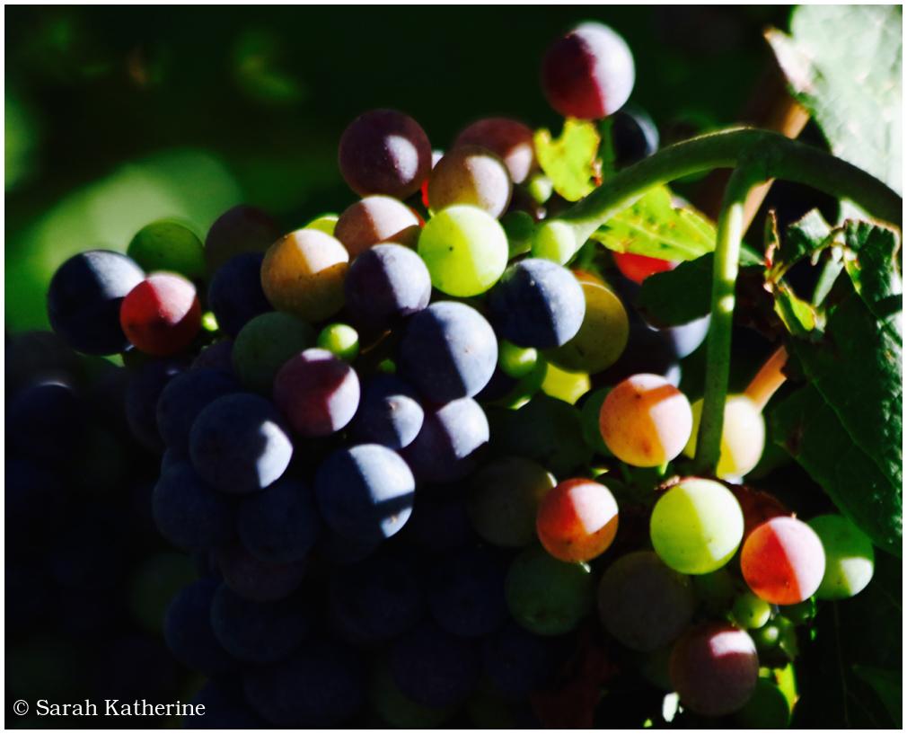 grapes, sunlight