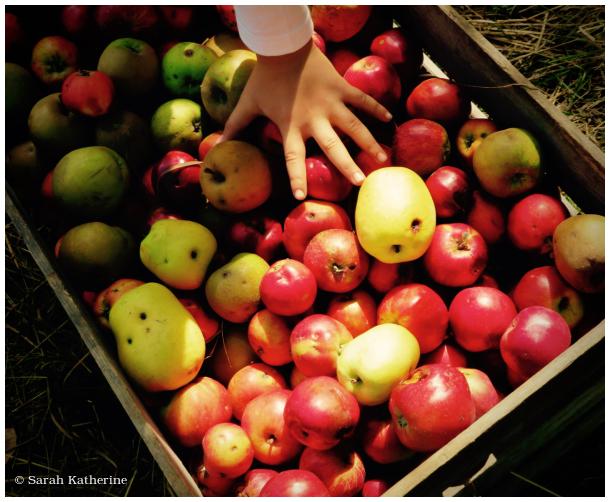 pommes, apples, hand
