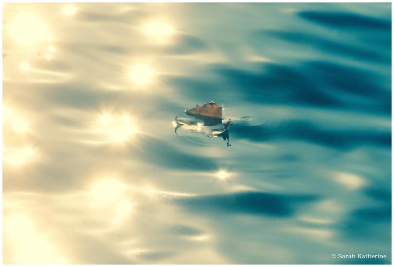 lake, leaf, light