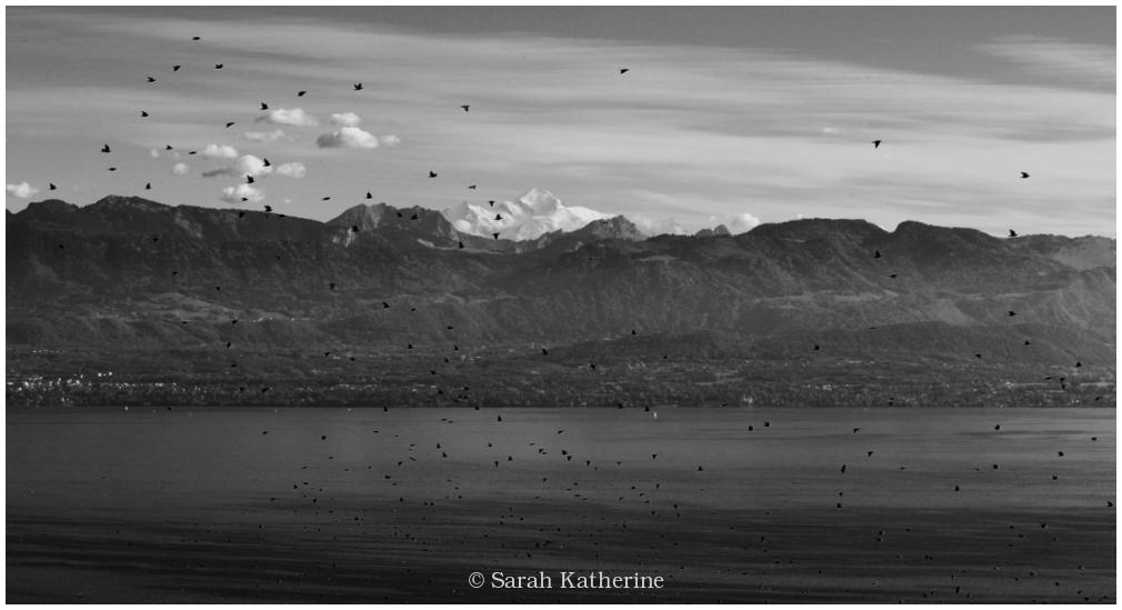 starlings, autumn, mont blanc, lake