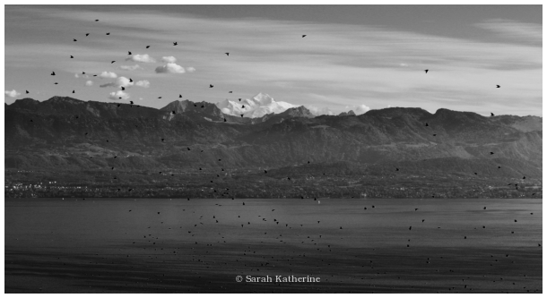 starlings, autumn, mont blanc, lake