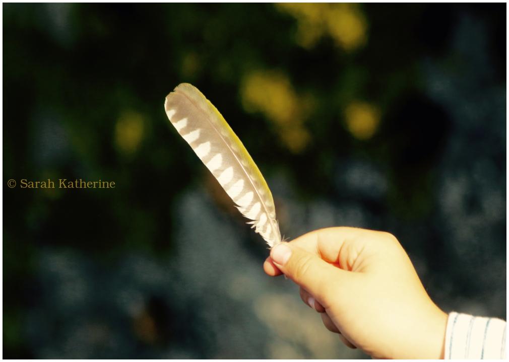woodpecker, feather, hand, autumn