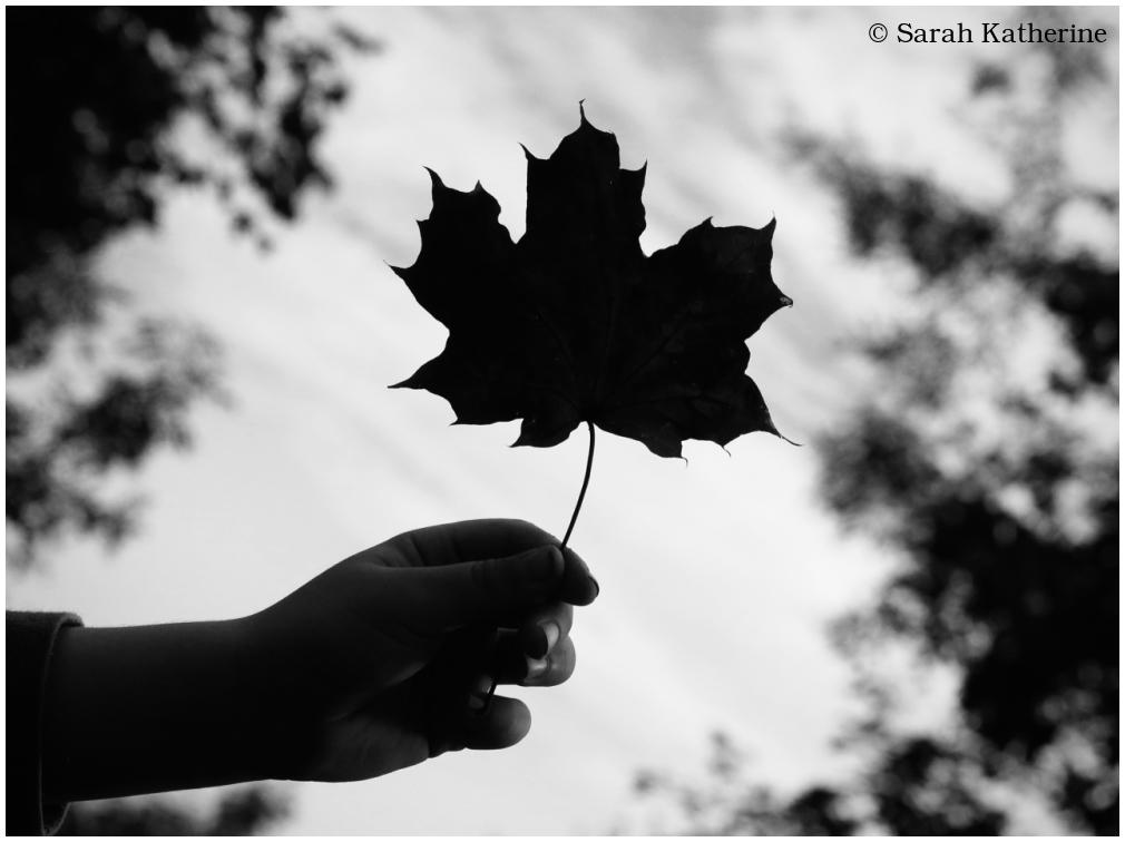 autumn, leaf, hand