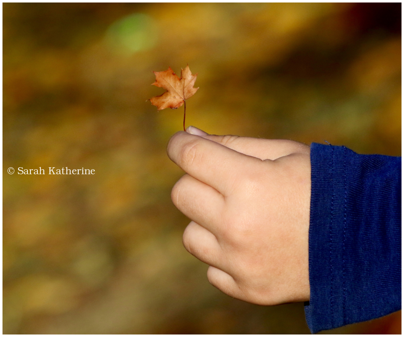 autumn leaf small hand
