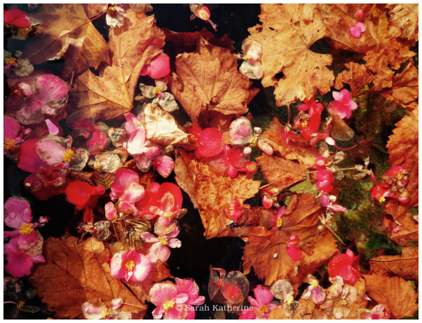 autumn, leaves, flowers, fountain, water