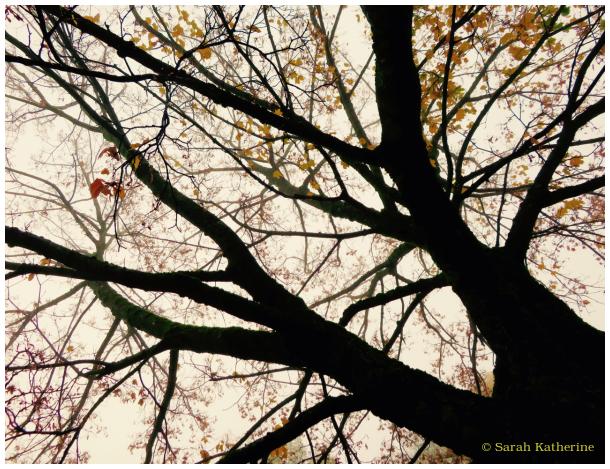 autumn, tree, fog