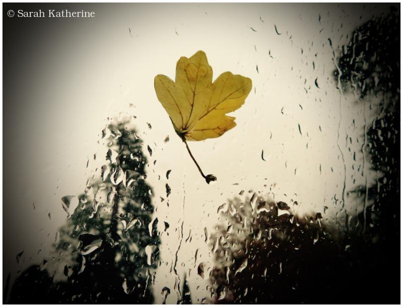window, leaf, rain, autumn