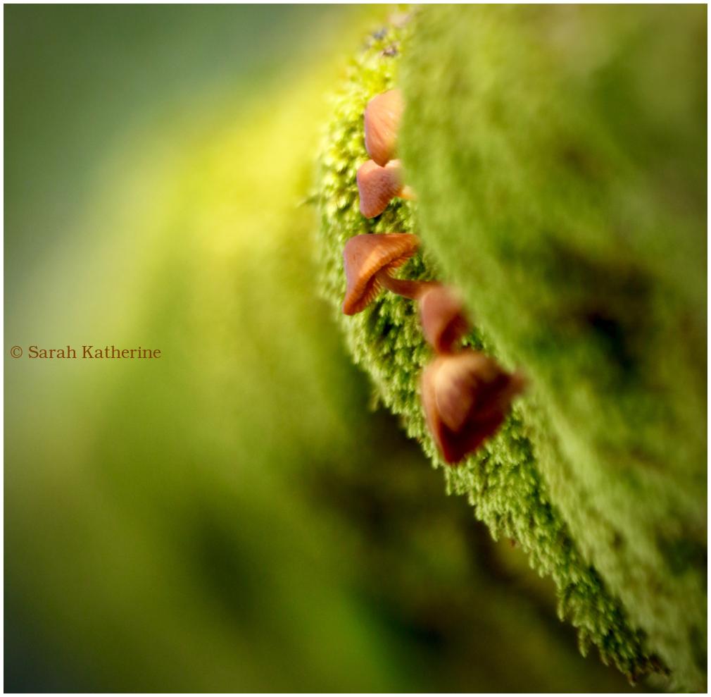 wall, mushroom, moss, autumn