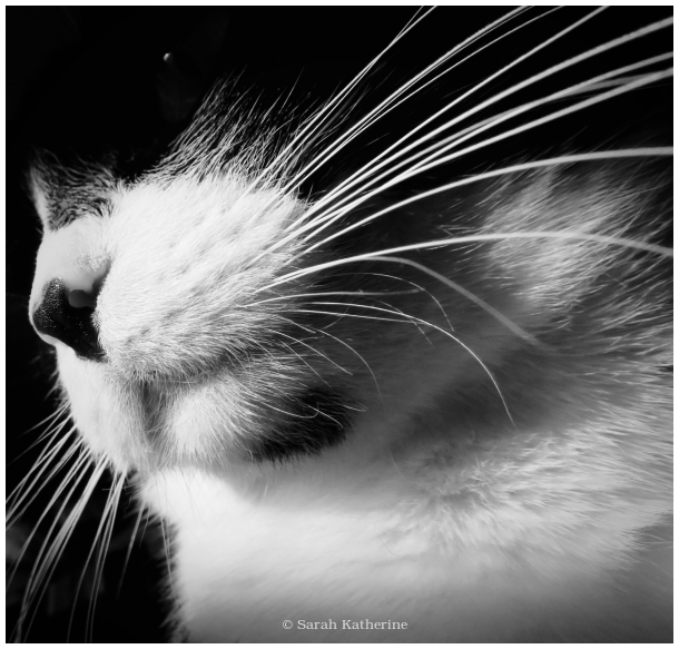 cat, whiskers, twinkle, eye
