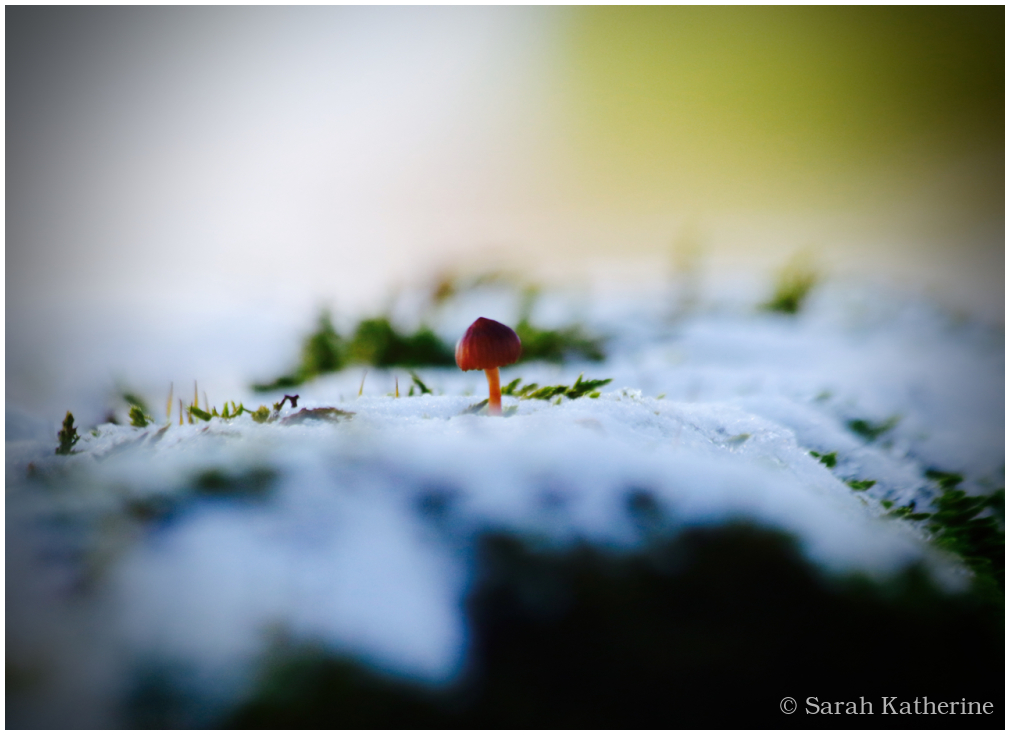 snow, winter, sunlight, mushroom