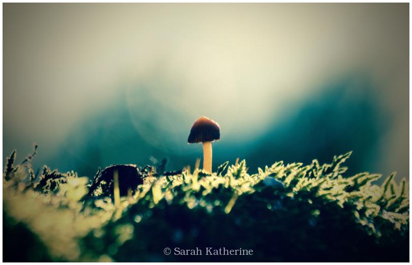 mushroom, blue, sunlight