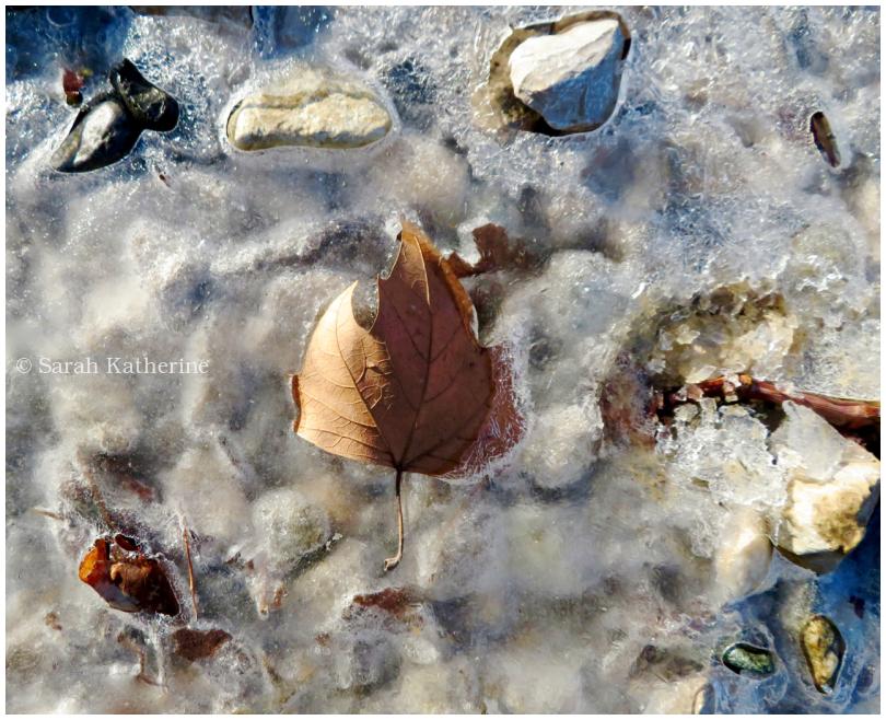 winter, ice, rocks, leaf