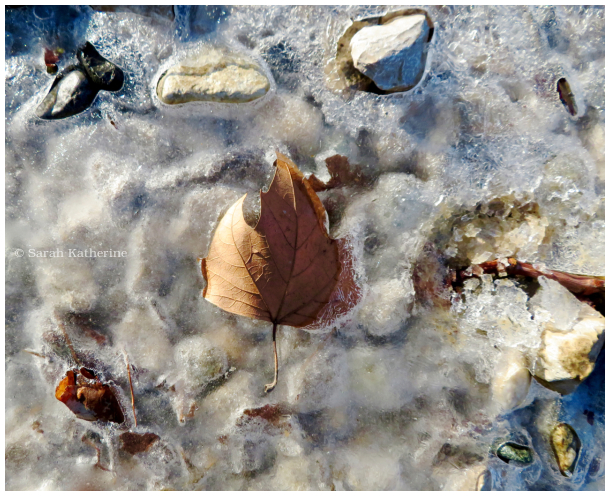 winter, ice, rocks, leaf
