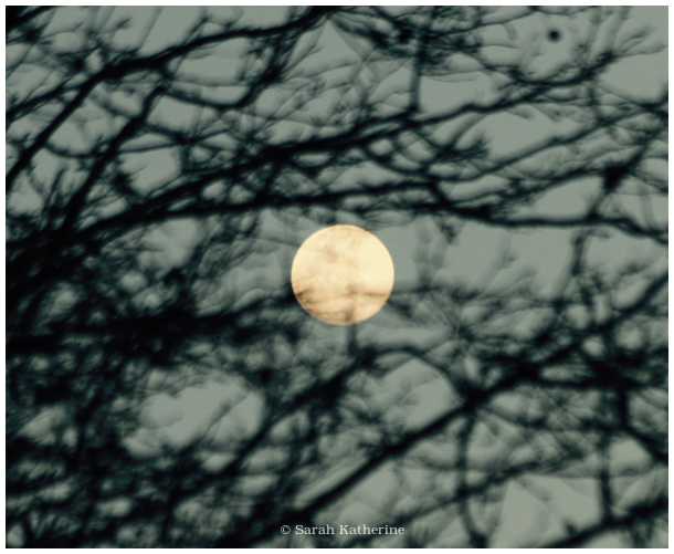 moon, equinox, spring