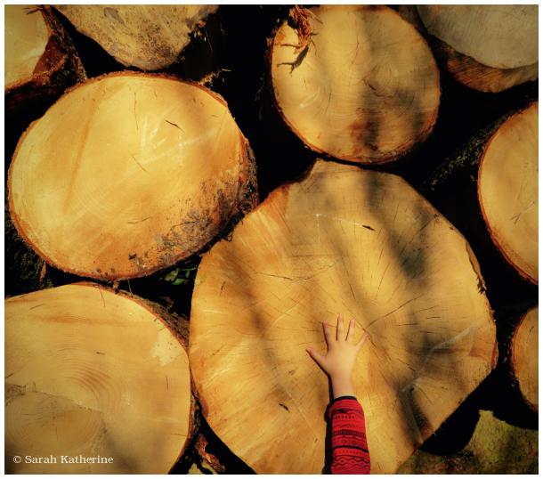 trees, hand