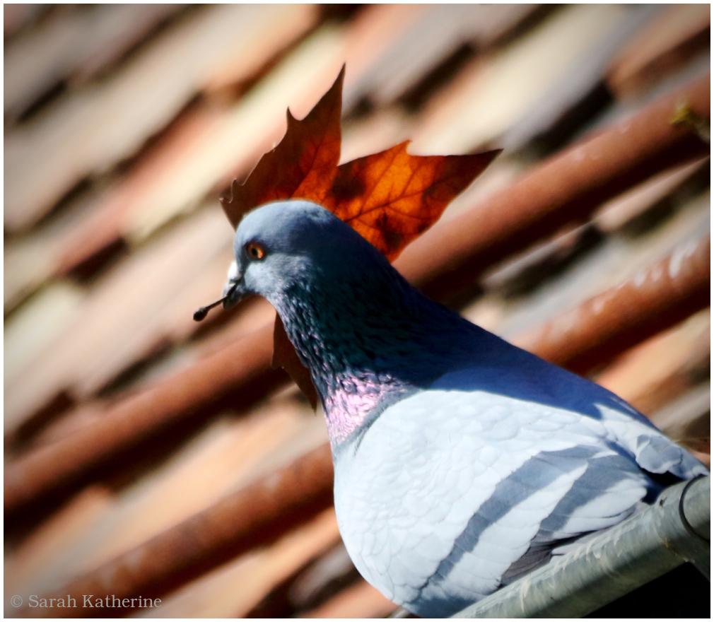 pigeon, leaf, nesting, spring
