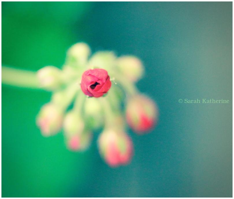 spring, bud, wee, little
