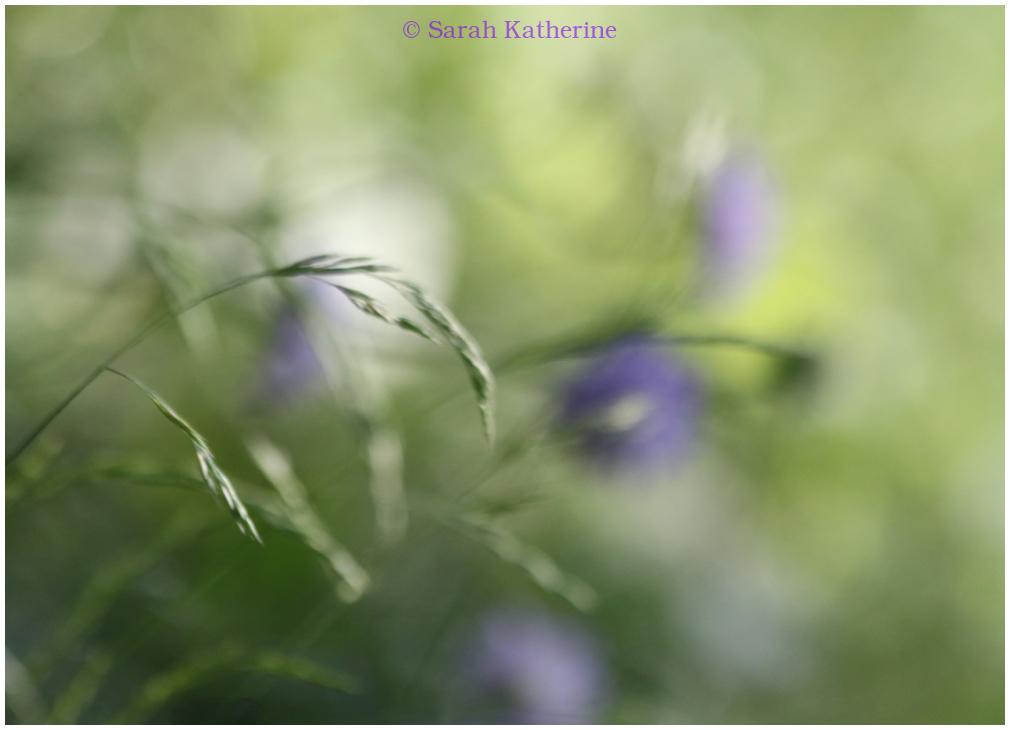wildgrass spring